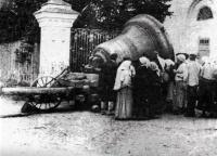 Сокрушенные купола собора. Пенза. 1931 г.