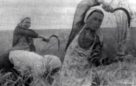 6.3 Великая Отечественная война. .