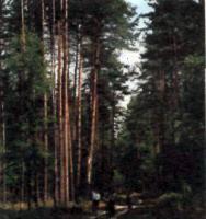 Золотаревский сосновый бор